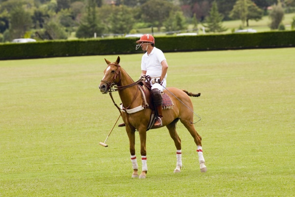 mann spielt polo