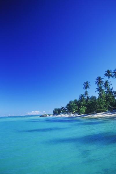 palmen am strand karibik