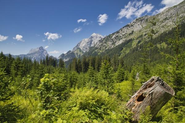 wald und berge im nationalpark gesaeuse