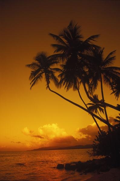 silhouette von palmen am strand karibik