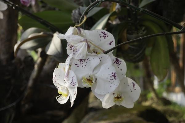 zierpflanze, im, garten - 29584603