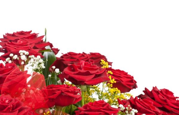 ecke aus roten rosen