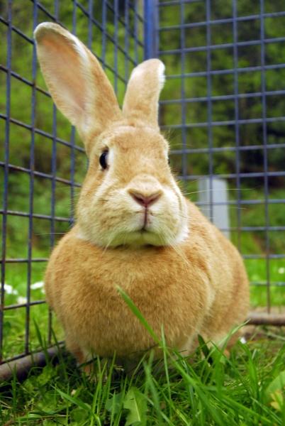 rabbit, or, hare, in, livestock, farming - 29681197