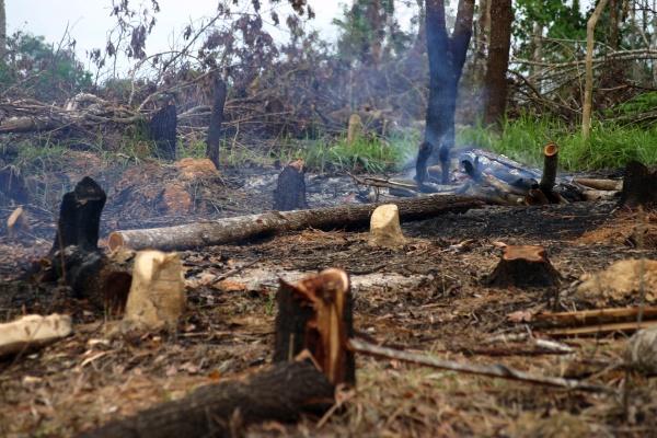 raeumung oder entwaldung im regenwald