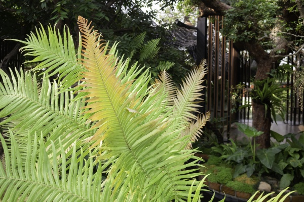 varieties, tropical, rainforest, foliage, plants - 29737932