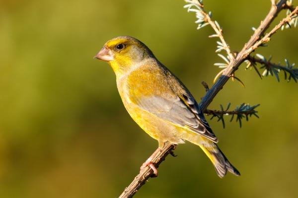 hübscher, vogel, in, der, natur - 29782666