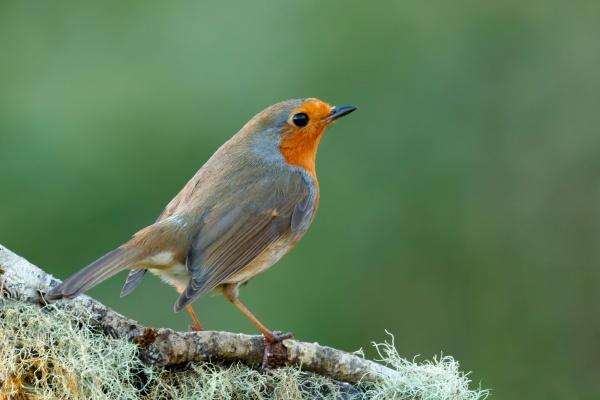 pretty, bird, with, a, nice, orange - 29782851