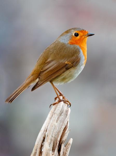 huebscher vogel mit einem schoenen orangeroten