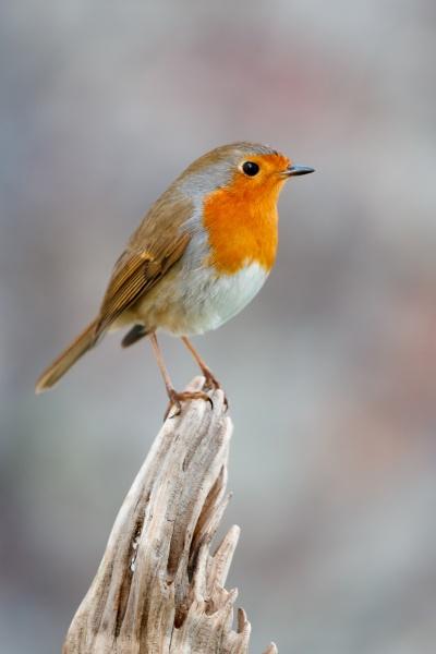pretty, bird, with, a, nice, orange - 29783955