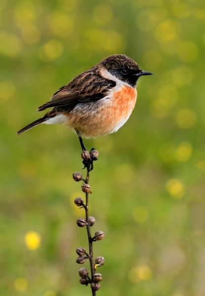 kleiner vogel auf einem schlanken ast