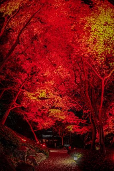 herbstlaub und rot beleuchtet ist ein