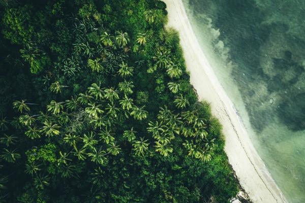 luftaufnahme von palmen am strand von