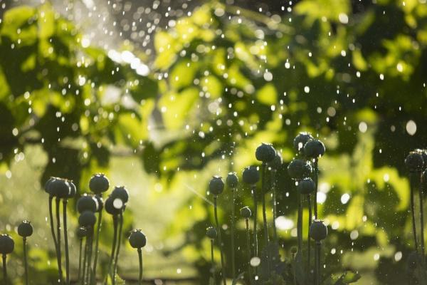 wassertroepfchen fallen ueber ueppige gruene pflanzen