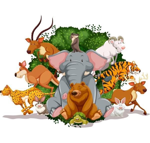 wildlife - 30236596