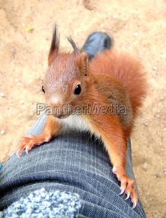 rodent skin hold rise climb climbing