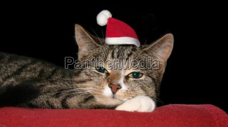 weihnachtskatzi
