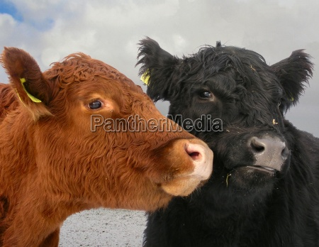consultation consultancy consulting winter animals agriculture