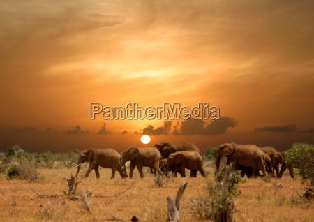 urlaub urlaubszeit ferien tier nationalpark sonnenuntergang