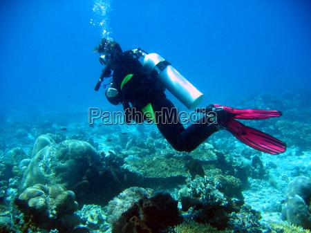 UEber den korallen