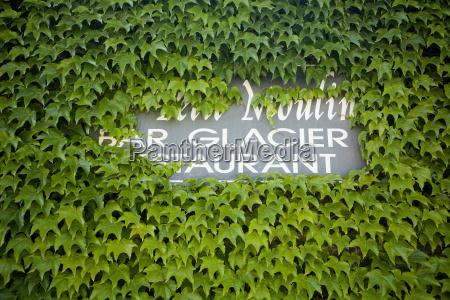 restaurant bar tavern detail plant green