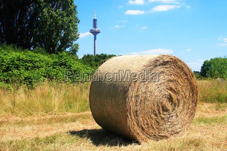 hay bales in frankfurt