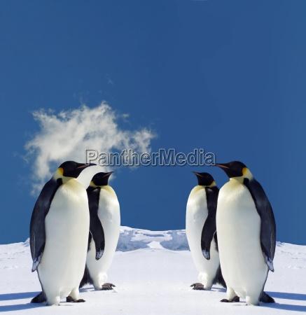 4 penguins