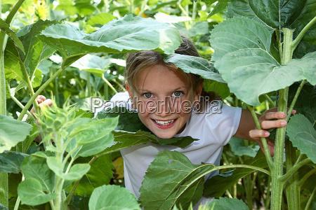 versteckspiel im sonnenblumenfeld