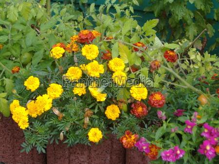 the small floral splendour