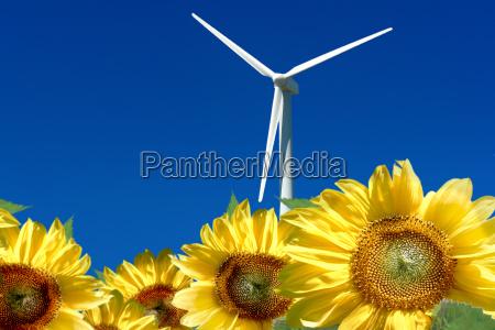 windmill behind sunflower field