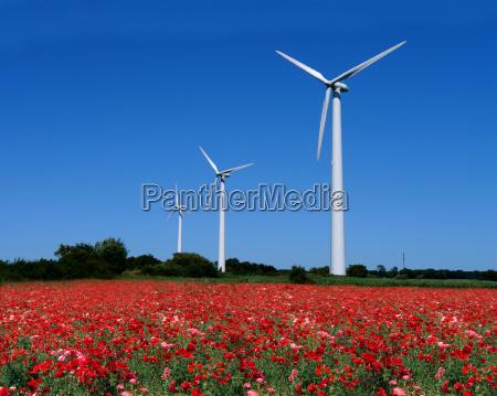 wind turbines behind mohnfeld