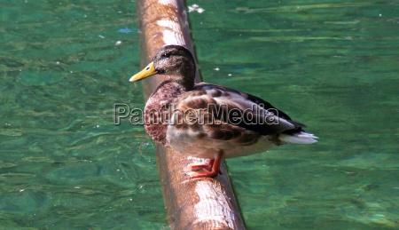 tree waters bird trunk birds wing