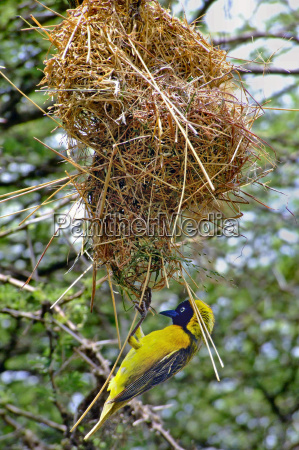 i like to hang on nest