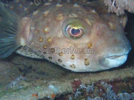 igelfisch smile