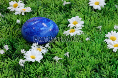 blue easter egg on the meadow