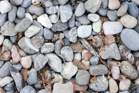 pebbles with leaves