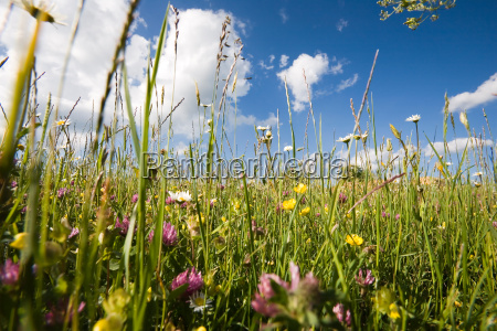 spring meadow on the alb