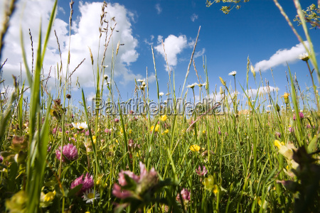 set in a spring meadow