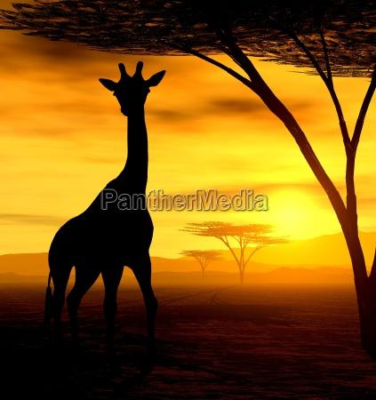 african spirit i