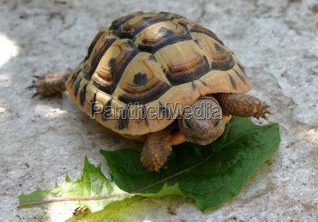 stone animal reptile green brown brownish