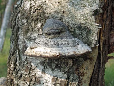 tree with mushroom