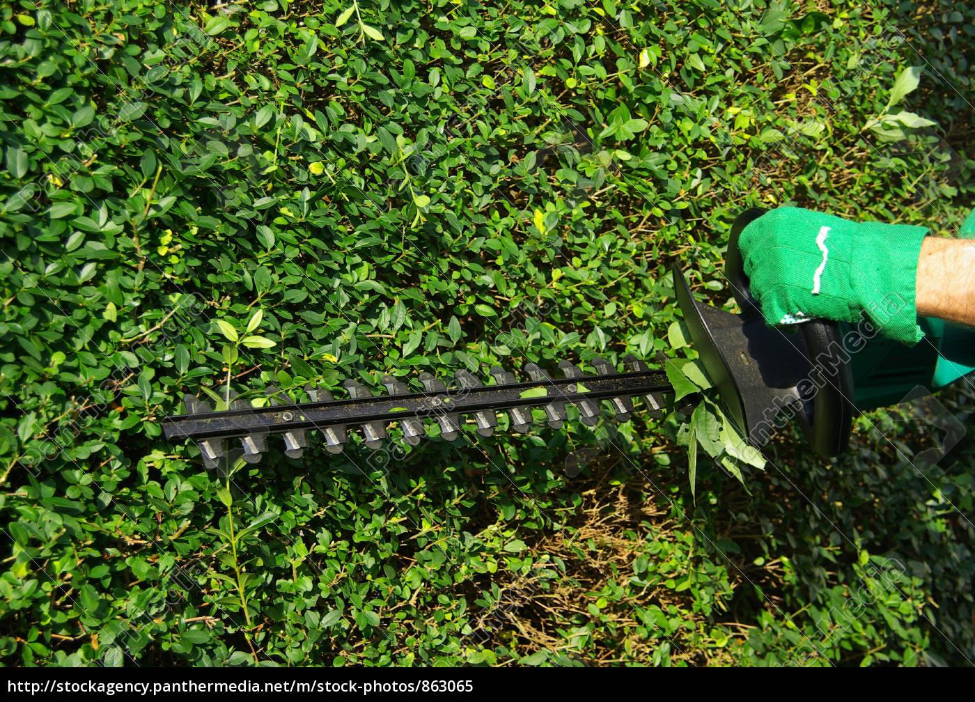 Hecke schneiden  Hecke schneiden 01 - Lizenzfreies Bild - #863065 - Bildagentur ...