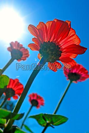 to grow towards the sun