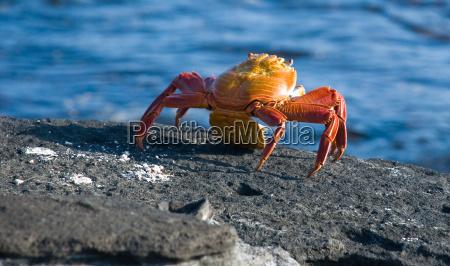 ei ablage auf krabbenart