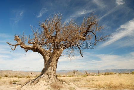 dried tree in the desert