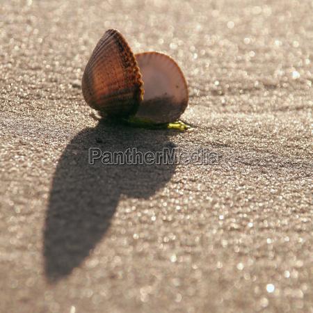 muschel auf dem strand