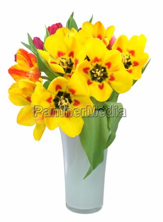 fresh tulip bouquet in vase