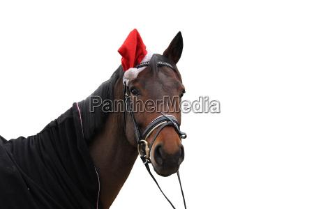 pferd mit zipfelmuetze