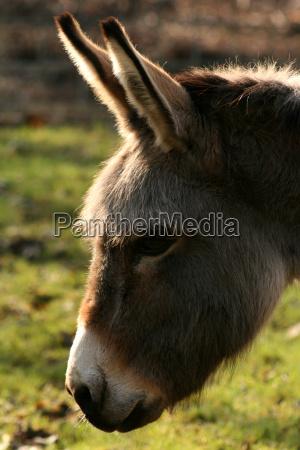donkey in backlight