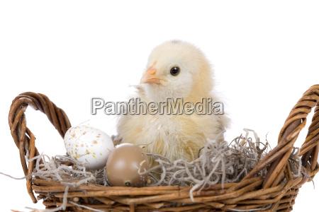 chicken in basket