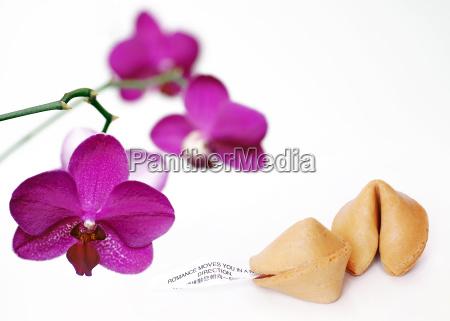 glueckskeks mit orchidee